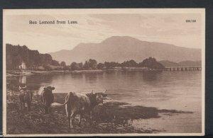 Scotland Postcard - Highland Cattle at Ben Lomond, From Luss RS10307