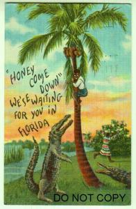 Black Americana, Honey Come Down / Alligator Fl