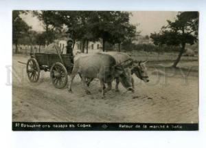 173304 BULGARIA SOFIA native carriage Vintage photo postcard
