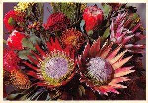Postcard Cape Peninsula, Bouquet of Proteas, South Africa #M23