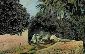 Algeria Bou Saada Street Donkey Postcard
