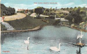 North Shields, The Park, swans