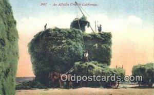 Alfaifa Crop Farming Unused