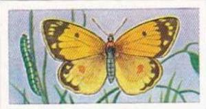 Swettenhams Tea Vintage Trade Card Butterflies & Moths 1958 No 18 Clouded Yellow