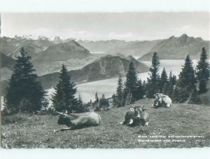 old rppc NICE VIEW Rigi-Kulm - Schwyz - Lauerz - Steinen Switzerland i2194