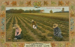 Homestead Life , Canada , 1900-10s ; Strawberry picking