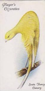 Players Cigarette Card Aviary And Cage Birds No. 11 Scots Fancy Canary