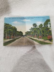 Vintage Postcard, Beautiful Palm Road on the Way to Indian Rocks and...