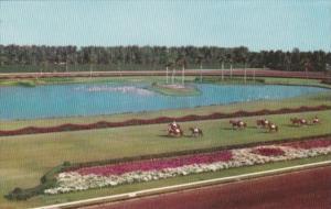 Florida Miami Parading Horses To The Post Hialeah Race Course