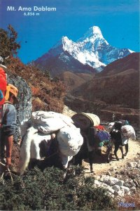 Nepal Mt. Ama Dablam yac carrier postcard