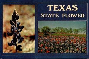 Texa State Flower Bluebonnets 1978
