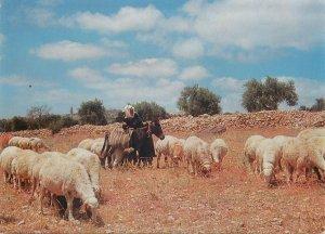 Postcard Palestine Bethlehem Shepherd with sheep flock ethnic types and scenes