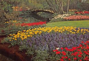 Netherlands Keukenhof Lisse Holland Flowers Decoration Bridge