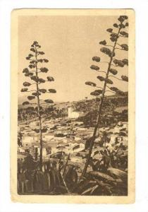 Le Vieux TENES , Algeria , PU-1924