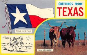 Greetings from Texas, State Flag, Longhorn cattle Bovine 1965