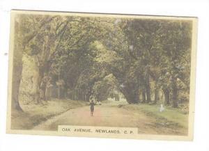 RP, Oak Avenue, Newlands, Cape Province, Union Of South Africa, 1900-1910s