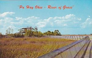 Pa Hay Okee Everglades National Park Florida