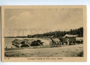 147325 CEYLON Cocoanut Estates river scene Vintage postcard