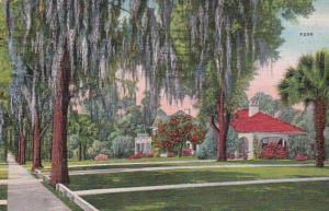 Florida Beautiful Shady Street Scene 1938