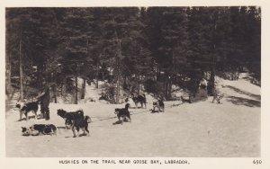 RP: GOOSE BAY , Labrador , 30-40s ; Huskie Dog Team on the Trail