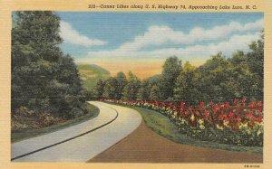 NC North Carolina CANNA LILIES~Highway 74 Approaching Lake Lure c1940's Postcard