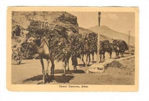 Camel Caravan, Aden , Yemen, 00-10s