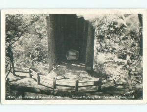 1940's rppc NICE VIEW Trees Of Mystery - Klamath Near Crescent City CA i7293
