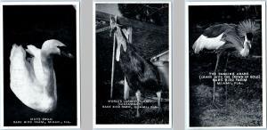 3 Postcards MIAMI, FL ~ RARE BIRD FARM ~ Mute Swan, Cassowary, Dancing Crane
