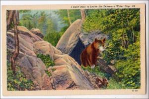 Bear, Delaware Water Gap PA