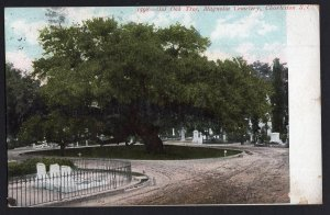 South Carolina CHARLESTON Old Oak Tree Magnolia Cemetery - pm1907 - Und/B