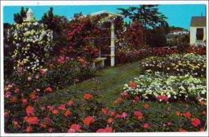 Jackson & Perkins Rose Garden, Newark NY