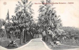 Portugal Lisboa Rua das Palmeiras no Jardim Botanico