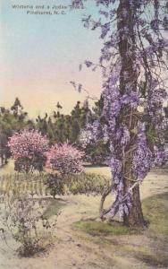 North Carolina Pinehurst Wisteria And Judas Tree Albertype