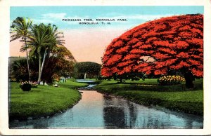 Hawaii Honolulu Moanalua Park Poiciana Trett