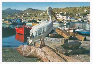 Mykonos, Le pelican  Petrus , Greece 50-60s