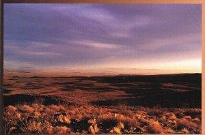 Cactus Mojave Desert Barstow California