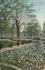 Rochester New York~Jones Square~Pink Purple White Tulips~Houses Behind~1908