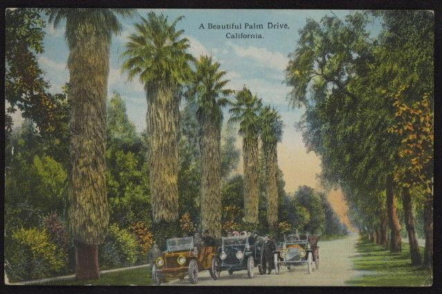 Early 20th c. early open-air automobiles driving on Palm Drive in Cal color pc