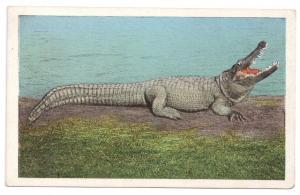 Jacksonville FL Big Joe Man Eater Alligator Osky's Ad