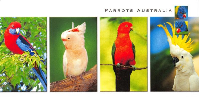 Large Panorama Size Postcard Parrots of Australia 215x105mm #955