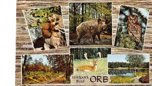 GG12429 Wildpark Bad Orb multiviews Owl Animals Forest Lake