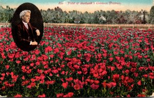 California Field Of Burbank's Crimson Poppies
