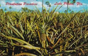 Pineapple Plantation Lake Placid Florida