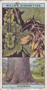 Wills Vintage Cigarette Card Flowering Trees &  Shrubs 1924 No 44 Sycamore