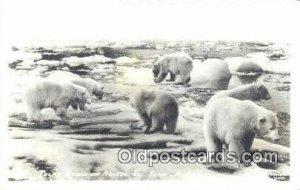 Artic Ics Floe, Alaska Bear  Unused