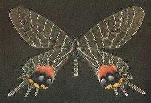 Bhutan Glory Butterfly British Museum Postcard