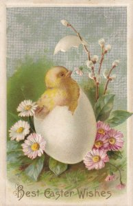 AS: EASTER, PU-1910; Chick popping out of egg shell, Flowers; WINSCH