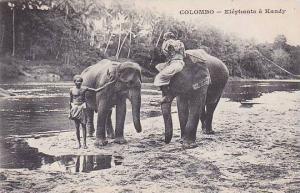 Ceylon Sri Lanka Elephants Of Kandy