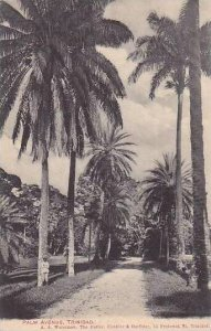 Trinidad Port of Spain Palm Avenue