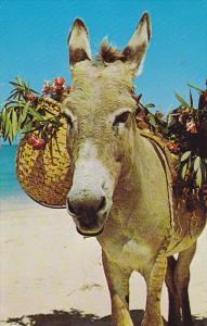 Charlie the Donkey, JAMAICA, 40-60's